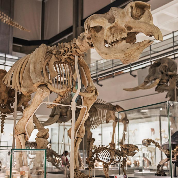 Museum of zoology